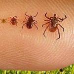 ticks2