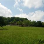 sheep-pastures