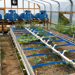 aquaponics-green-house