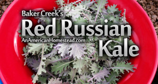baker-creek-kale-seeds