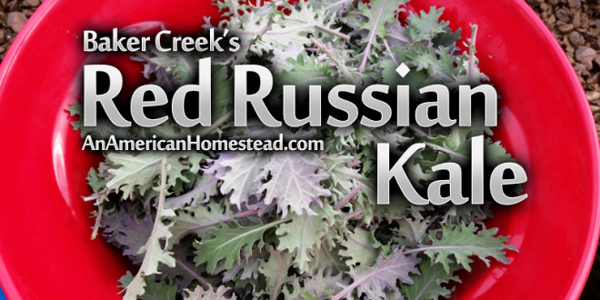 baker-creek-kale-seeds
