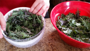 making-kale-chips