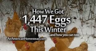 winter-eggs