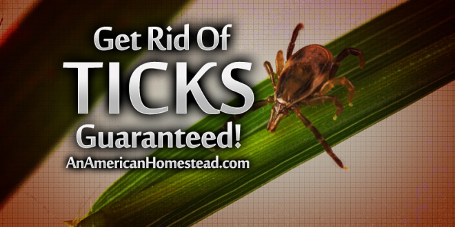 get-rid-of-ticks