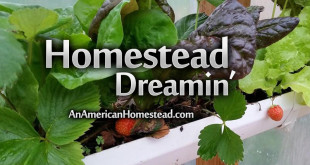 homestead-dreamin