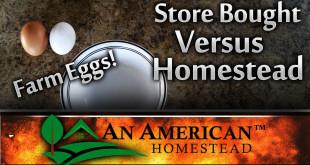organic-egg-store-bought