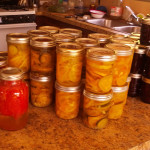 squash-pickles
