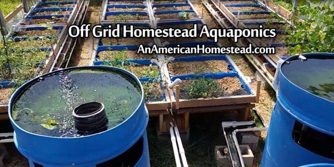 homestead-aquaponics