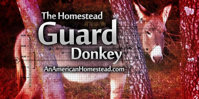 guard-donkey