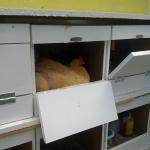chicken-coop8