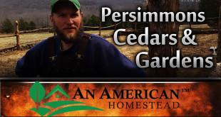 Persimmons-cedars-gardens