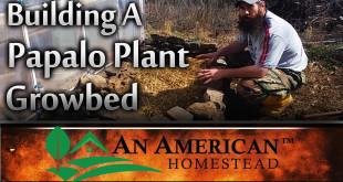 Papalo-cilantro-planting