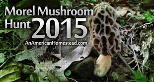 morel-mushroom-hunt-2015