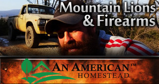 homesteading-firearms