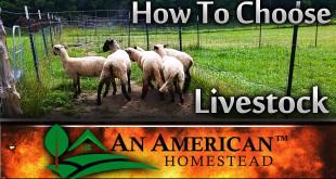 livestock-choices