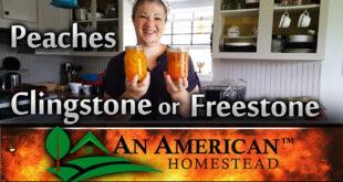 freestone-peaches