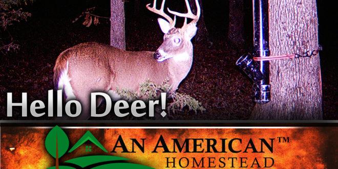 deerhunt-homestead