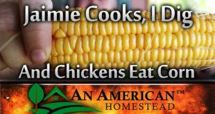 corn-harvest