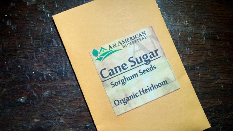 Sugar Cane Seeds