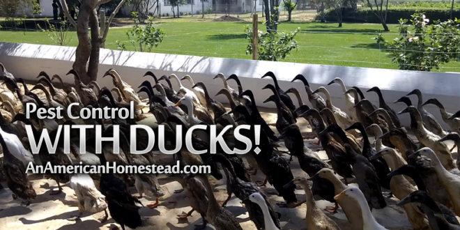 ducks-garden