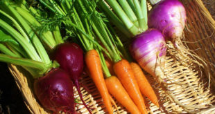 Top 5 Heirloom Seeds Companies