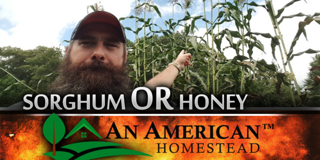 Sorghum Or Honey